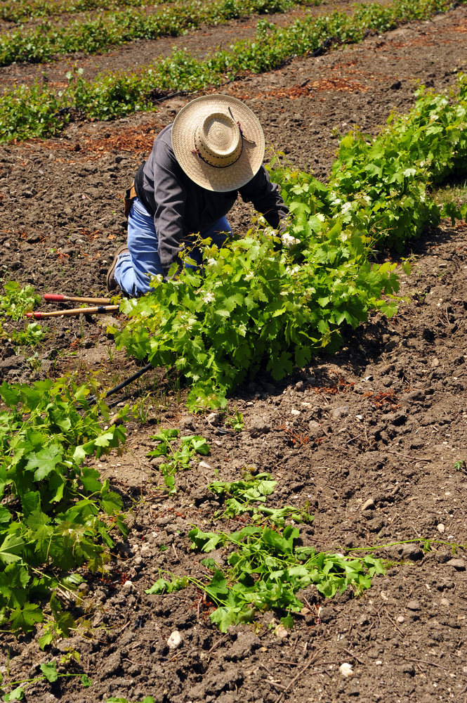 What to Know About Hiring Seasonal Workers
